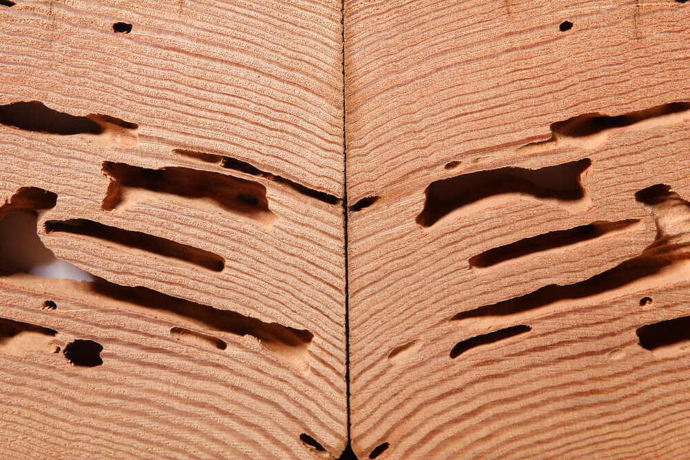 wooden-garage-wood-pests