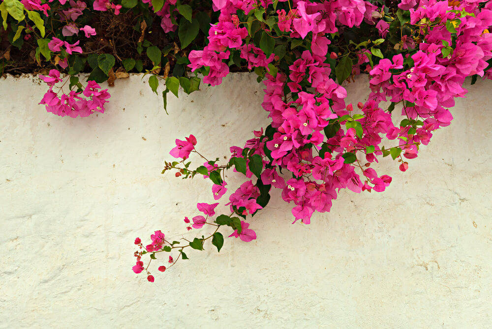 Bougainvillea-mobile-home