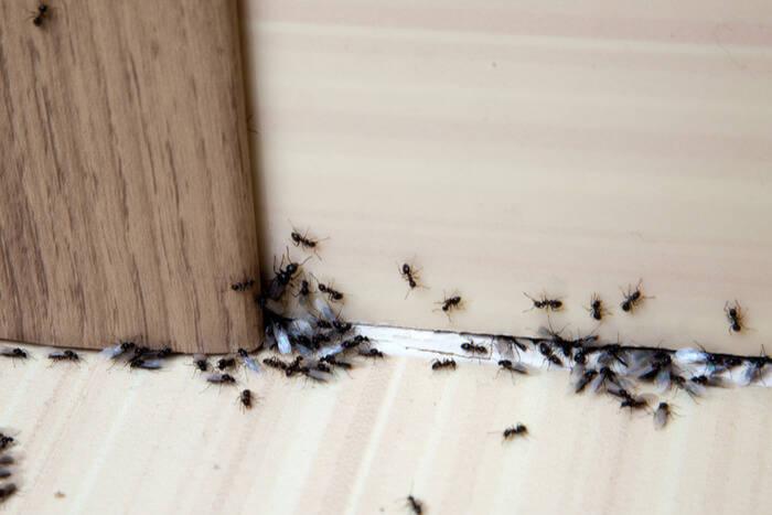 ants log cabin