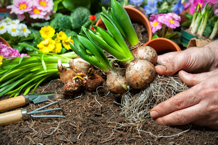 flower-bulbs-garden-plants