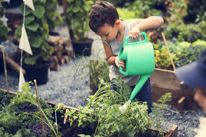 How to Take Care of Garden Plants in the Summer