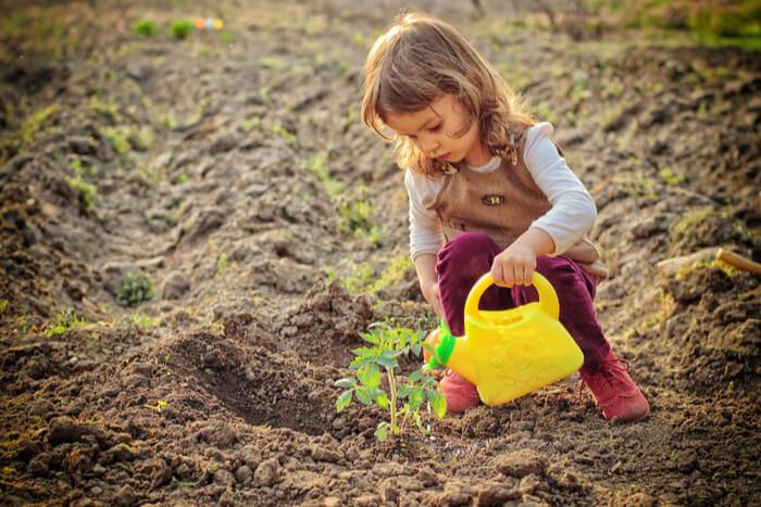 When to Plant a Garden