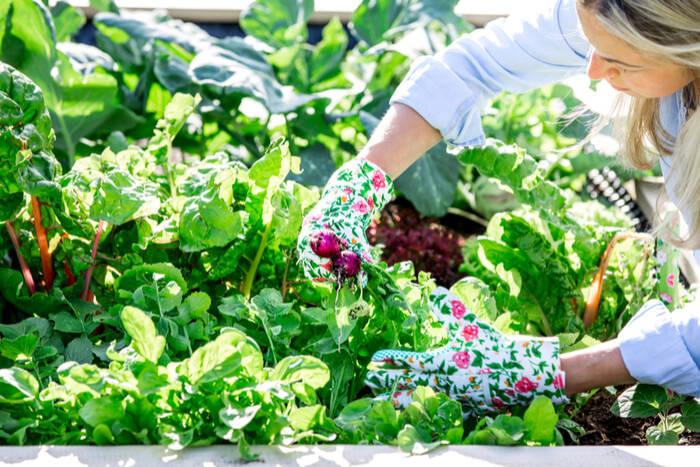 Biodynamic Gardening: What is it?