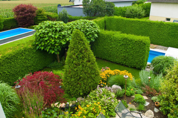 Trees and Shrubs: Things Everyone Needs to Know