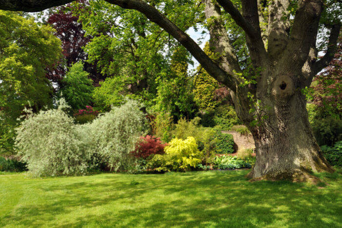 Beautiful Trees to Plant in Your Garden