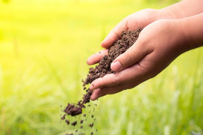 Potassium best soil for new trees