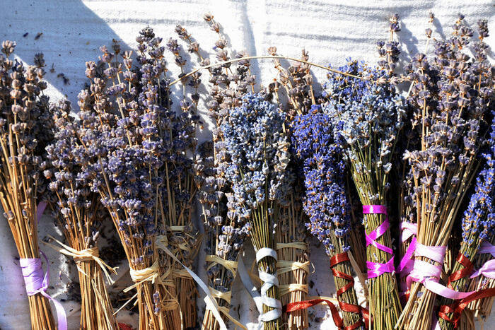 How to grow lavender and how you can use it