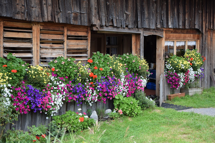 Log Cabin Garden: 7 Types of Flowers That Are Easy To Grow